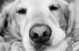 2015 Dog Friendly Class C Sunseeker By Forest River 3170ds - Dog Friendly ! 2015 Easy to Drive Class C 32 Foot Forest River Sunseeker